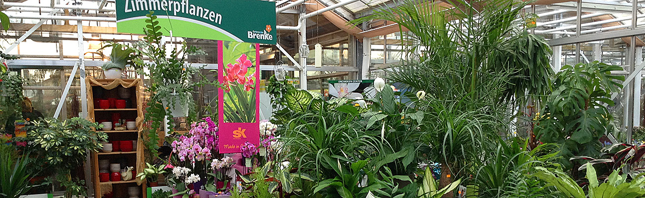 Zimmerpflanzen gartencenter brenke ihre g rtnerei in berlin franz sisch buchholz - Zimmerpflanzen berlin ...